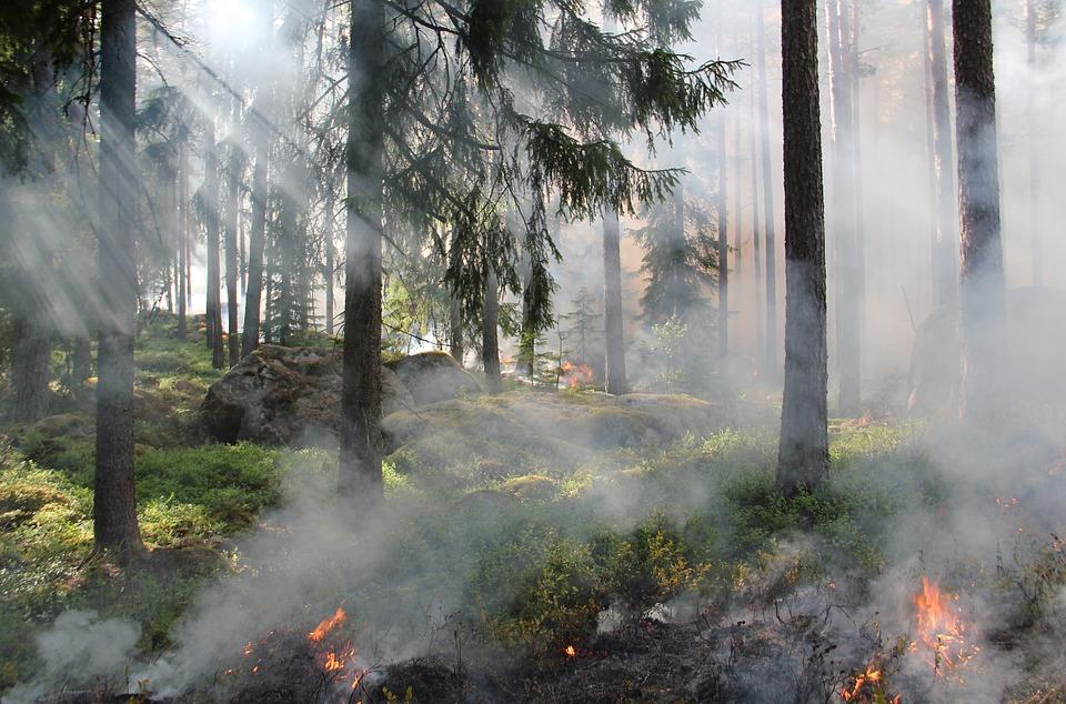 Mahoy y WWF contra incendios