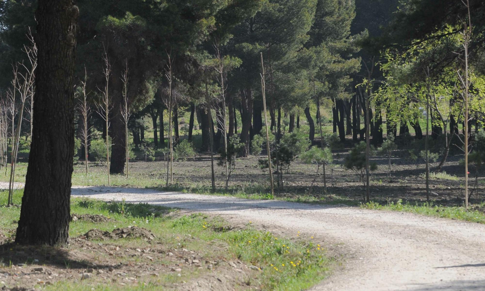 NNuevo Bosque Metropolitano